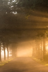 September light (CarolienCadoni..) Tags: sony sonyilcaa99m2 2470mmf28zassm sal2470z trees light road sunlight rays sunrise raysoflight