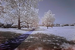Streatham common infrared view (Luis FrancoR) Tags: streathamcommoninfraredview infrared infraredview infrarrojo park parque ngw ng ngc ngs ngd ngg london londres