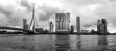 Panorama Rotterdam pont Érasme (musette thierry) Tags: rotterdam paysbas holande europe musette thierry d800 nikon paysage vue panorama architecture noiretblanc blackandwhite ville