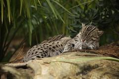 IMG_4486 (gabrielgs) Tags: holiday holiday2018 vakantie2018 camping frankrijk france zoo la fleche lafleche animals dierentuin loire