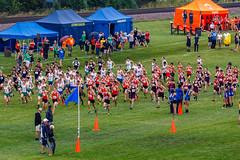 JHHS-Track_20180901-113921_60 (sam_duray) Tags: 201819 duray fentoninvitational hersey herseyxc jhhs jason john athletics crosscountry publish sports