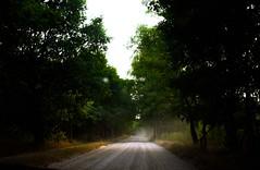 veluwe drive (Trang |C-Cat|) Tags: veluwe netherlands europe forest drive summer trees road nikon light nikond3300
