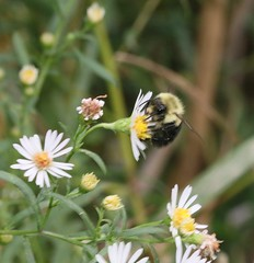 Bug crawls (REGOR NOTPUL) Tags: insects arachnids moths fly beecrab spider glenburnie ontario