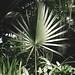 Palm Dome, Como Conservatory 9/10/18 #comozooconservatory #mysaintpaul