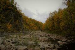 fra Ydalen (KvikneFoto) Tags: nikon1j2 høst landskap autumn fall ydalen natur samyang 8mm fisheye mf