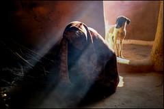 Grandma.  Thar desert (Claire Pismont) Tags: asie asia inde india rajasthan pismont clairepismont light lifeinindia life lightandshadow travel travelphotography thardesert thar desert documentory