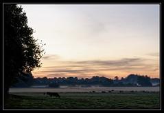 In the morning ... (malp007) Tags: treene morgen morning dämmerung sunrise landscape landschaft fog mist nebel tage cowshed willow schleswigholstein tyskland germany weide marken ko sky himmel sonnenaufgang