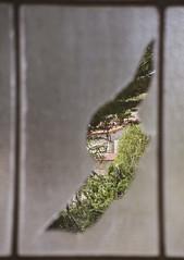 (Graciela A. G.) Tags: window spy trees houses broken glass shape ruins factory león spain