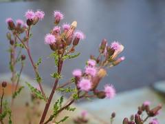 Flower (Pico 69) Tags: blume blüte natur lila pflanze oldenburg pico69 schön