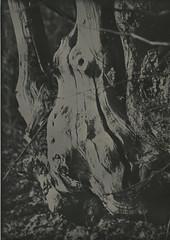 Raped Mother Nature (gripspix (OFF)) Tags: print handabzug art kunst lomography experimentelleentwicklung bioentwickler alternativedeveloper juglol walnutleaves walnussblätter decoct sud soda natriumcarbonat kaliumhydroxid potassiumhydroxide experimental experimentell lowkey dark düster nature natur baum tree rotten abgestorben decay verfall