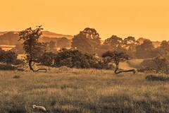 Sunset at Grayrigg (gabormatesz) Tags: england unitedkingdom gb sunset canon canon80d nature naturephotography photography 70200mm landscape landscapes goldenhour lambrigg grayrigg