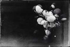 Grapes-13948 (Poetic Medium) Tags: grapes stilllife produce blackandwhite kitcamghostbird multipleexposure mextures snapseed ipod food