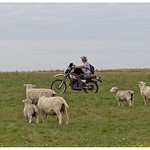 It's a dog on a bike chasing a sheep.