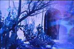 Albuquerque, NM (cestlameremichel) Tags: canon ae1 kodak ekta expired ektachrome 64t bluescale blue albuquerque new mexico nouveau mexique route 66 route66 film 35mm analog analogica analogue argentique