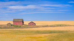 Barn Wheatfield 9173 A (jim.choate59) Tags: barn wheatfield field shermancountyoregon summer jchoate on1pics d610 rural