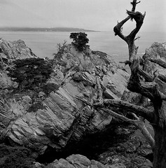 Point Lobos (bingley0522) Tags: rolleiflexautomatmxevs carlzeisstessar75mmf35 yellowfilter trix diafine epsonv500scanner pointlobos coastalcalifornia pacificocean californialandscape autaut