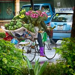 A Flower Seller Riding A Bike (Hanoi, Vietnam. Gustavo Thomas © 2018) (Gustavo Thomas) Tags: flower seller bike bicycle transportation colour colorfoul street rue calle life vida hanoi asia asian vietnam adventure city urban traveller