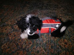 Sam trying on his new life jacket