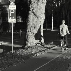 Next parking (Bernhardt Franz) Tags: next parking nächster parkplatz person bicycle cyclist tree baum shadow schatten verkehrsschild blackandwhite bw street