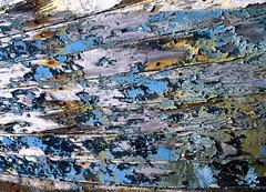 Boat Detail with Flaking Paint (CactusD) Tags: borghasdal borrisdale scotland harris isleofharris outerhebrides hebrides boat paint wood nails texture detail closeup greatbritain great britain epson epsonv850 v850 silverfast uk unitedkingdom gb landscape film fuji fujichrome velvia velvia50 5x4 4x5 largeformat large format linhof technikardan tks45 s45 schneideraposymmarmc150mmf56 150mm f56 schneider aposymmar