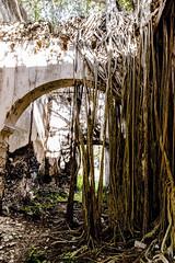 Simbiosis (andréscórdova) Tags: méxico mexico yucatán yucatan mérida hacienda raices antiguo ancient city