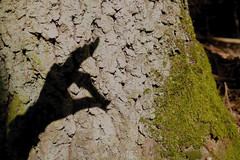 Catch me if you can! (Binacat) Tags: canon eos 750d berlin eichwalde wald woods forest nature natur schattenspiel schatten shadow shadowplay baumstamm trunk moss moos hand baumrinde treebark color shadows trees outside