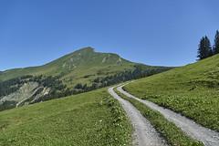 the way to luck (ivoräber) Tags: mountain sony switzerland swiss schweiz berg grün green