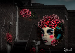 The beauty on the wall (Kakeart) Tags: rooabrook streetart art wall street southsea seafront sea decouage painting collage artist face roses redroses eyes