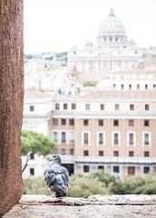 Angel / Dove (campra) Tags: rome roma italy italia castelsantangelo castle dove michelangelo dome sanpietro saintpeters view