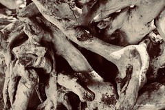 Entangled (jenelle.melchior) Tags: wood driftwood nature brown root tree texture black beach ocean