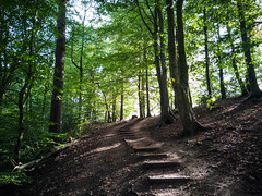 Woodland steps (Grifos) Tags: woodland woods trees steps forest cheshire slope