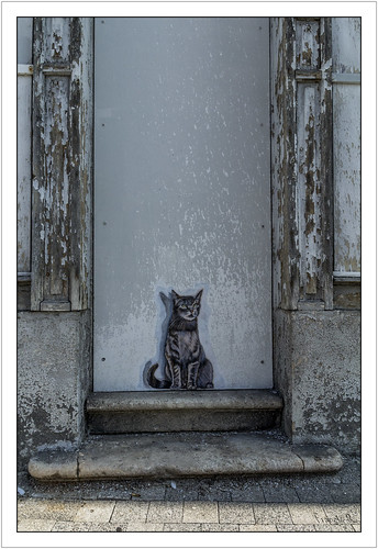 Le chat qui restait à l'ombre (Street art)