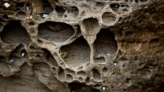 Wave eroded refuges (Kendar Creatives) Tags: macromondays rock sydney australia history nature rustic refuge earthy earth fossil millionyears