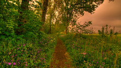 Edge of Tomorrow. (Alex-de-Haas) Tags: 11mm blackstone d850 dutch europa europe hdr hetwildrijk holland irix irix11mm irixblackstone nederland nederlands netherlands nikon nikond850 noordholland sintmaartensvlotbrug sintmaartenszee beautiful beauty bloei bloem bloemen bloom bomen boom bos flora flower flowers forest forestflowers green groen landscape landschaft landschap lente mooi nature peace peaceful plantation planten plants spring sundown sunset tree trees vredig woods woud zonsondergang
