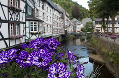 Monschau Flowers (music_man800) Tags: monschau germany deutschland de town village river timber houses buildings quaint historic vintage beautiful pretty rustic scenic road trip holiday june 2018 warm purple flowers flora colours colourful color trees woods valley gorgeous pedestrianised canon 700d adobe lightroom creative cloud edit photography outdoors outside natural light lighting focus arty evening