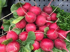 Radishes (joncutrer) Tags: food produce vegetables cc0 royaltyfree cooking ingredients radishes radish red root