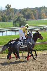 "2016-10-16 (19) r3 Julian Pimentel on #2 Synergist (JLeeFleenor) Tags: photos photography md maryland marylandhorseracing marylandracing laurelpark jockey جُوكِي ""赛马骑师"" jinete ""競馬騎手"" dżokej jocheu คนขี่ม้าแข่ง jóquei žokej kilparatsastaja rennreiter fantino ""경마 기수"" жокей jokey người horses thoroughbreds equine equestrian cheval cavalo cavallo cavall caballo pferd paard perd hevonen hest hestur cal kon konj beygir capall ceffyl cuddy yarraman faras alogo soos kuda uma pfeerd koin حصان кон 马 häst άλογο סוס घोड़ा 馬 koń лошадь julianpimentel outdoors outside"