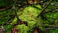 Niinisaari Forest, East-Helsinki, Finland. (Esa Suomaa) Tags: esasuomaa helsinki finland europe scandinavia autumn forest trees olympusomd zuikopro nature earth suomi