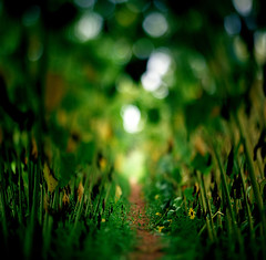 The growth of defocused dreams (Zeb Andrews) Tags: hasselbladflexbody hasselblad kodakektar100 sauvieisland oregon color green summer pacificnorthwest film mediumformat tiltshift ishootfilm bendinglight