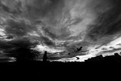 20180904 Morning when a typhoon comes (soyokazeojisan) Tags: japan osaka bw city street light clouds blackandwhite people bird tree river monochrome digital olympus em1markⅱ 714mm 2018 sunrise
