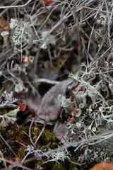 A forest bed (jannaheli) Tags: suomi finland karjalohja nikond7200 luonto nature luontovalokuvaus naturephotography cottagelife mökkielämä syksy autumn outdoor