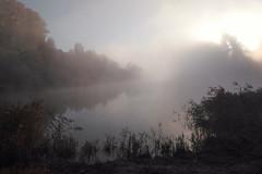 Foggy sunrise (decemberGirl.) Tags: fog foggy morning sunrise lake sun water reflection trees novosibirsk