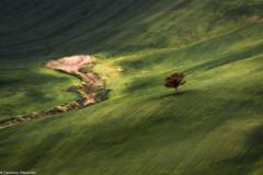 Campagna dipinda (SDB79) Tags: campagna molise ururi grano verde linee