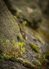 Growth (A-DPhotos) Tags: foliage river rocks