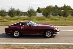 Ferrari 275 GTB (AureilFerrari) Tags: aureil auto automobile automotive car coche wagen voiture worldcars sport carbu anniversary anniversaire 70 numéro série teilaio serial number canon eos 60d