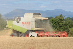 Claas Lexion 460 Combine Harvester cutting Winter Barley (Shane Casey CK25) Tags: claas lexion 460 combine harvester cutting winter barley castletownroche grain harvest grain2018 grain18 harvest2018 harvest18 corn2018 corn crop tillage crops cereal cereals golden straw dust chaff county cork ireland irish farm farmer farming agri agriculture contractor field ground soil earth work working horse power horsepower hp pull pulling cut knife blade blades machine machinery collect collecting mähdrescher cosechadora moissonneusebatteuse kombajny zbożowe kombajn maaidorser mietitrebbia nikon d7200