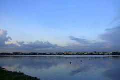 IMG_4970 (mohandep) Tags: madivala lakes bangalore wildlife scenery sun flowers insects birding buses