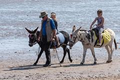 DSC_4555.jpg (BarrySmith1950) Tags: donkeyrides scarborough