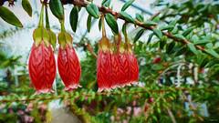 Botanischer Garten München (fotokunst_kunstfoto) Tags: botanik botanischergarten botanoscher garten münchenmünchenblumenschmetterlingeexotikexotische blumeexotische pflanzen gewächshaus tropenhaus