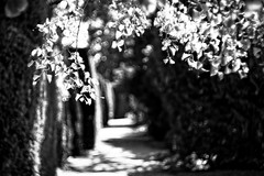 Alley - Carl Zeiss Jena Biotar 58mm f 2,0 (petrwag) Tags: sonya6500 biotar carlzeiss